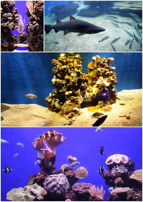 Mallorca Palma Aquarium