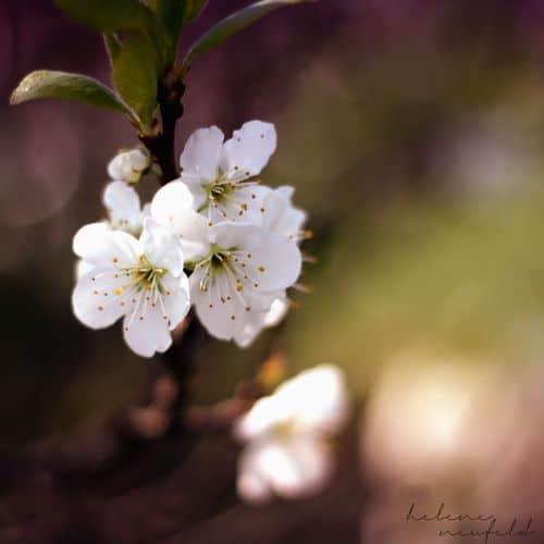 Frühling 2012 3