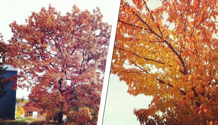 Herbst am Umwelt-Campus 2