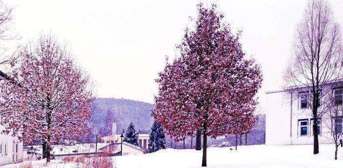 lila schnee