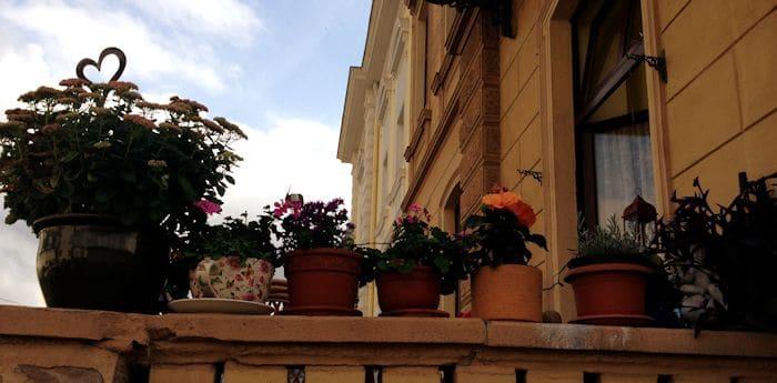 Boppard Blumen