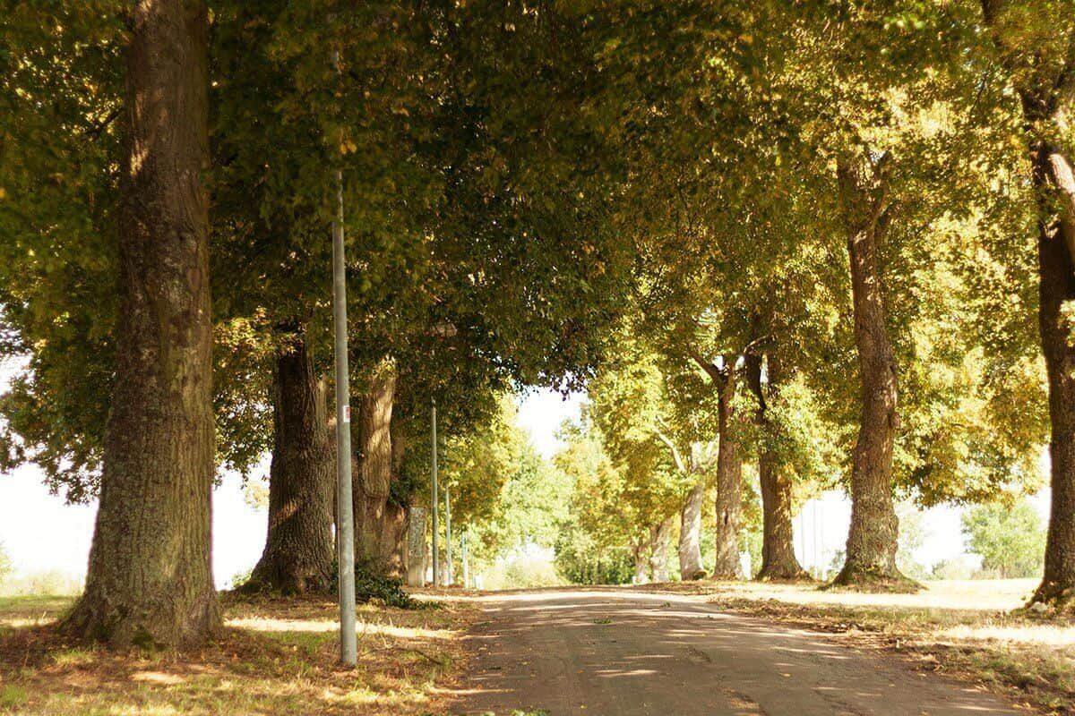 Location Sargenroth