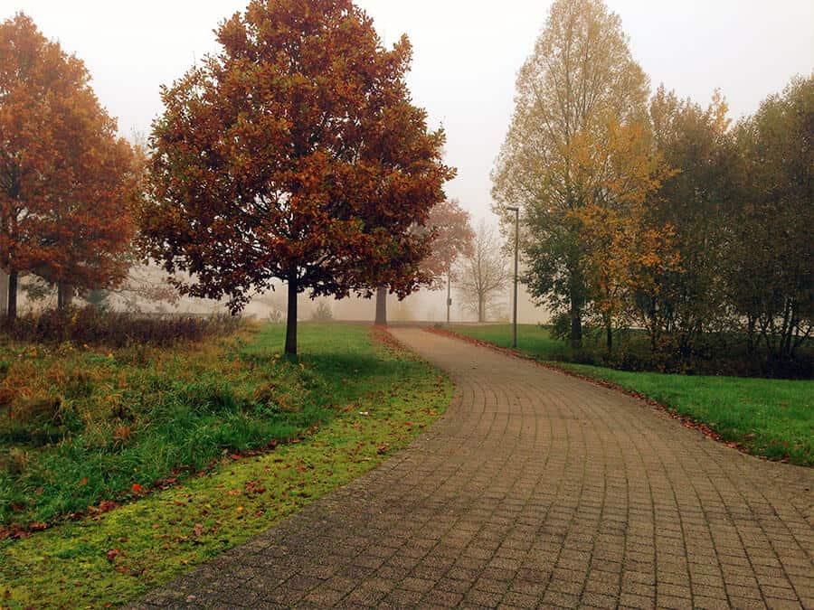 Herbst am Campus zwischen den Wohnheimen