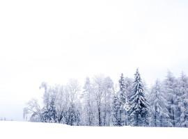 Winterwonderland im Hunsrück