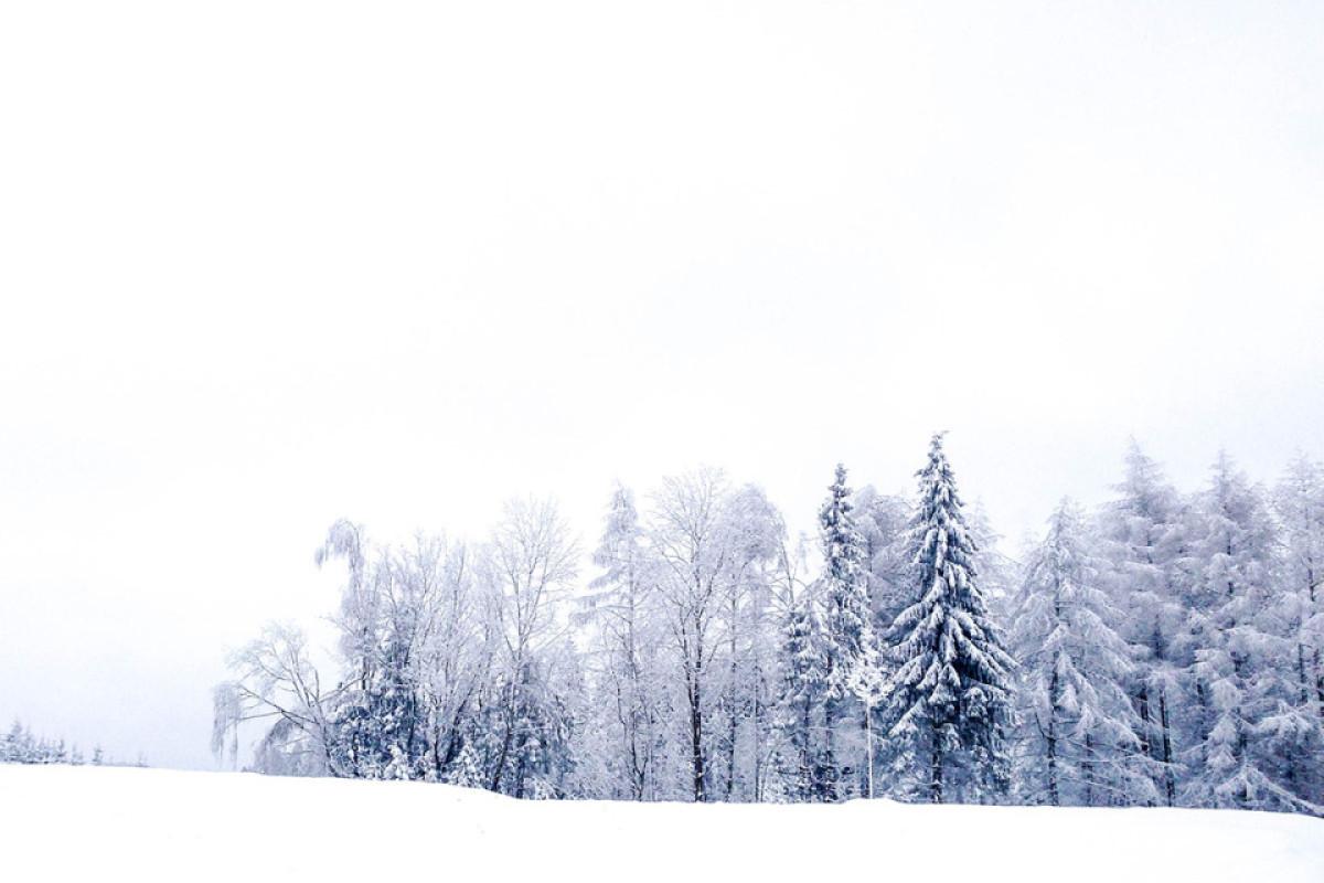Puderzucker Bäume im Hunsrück
