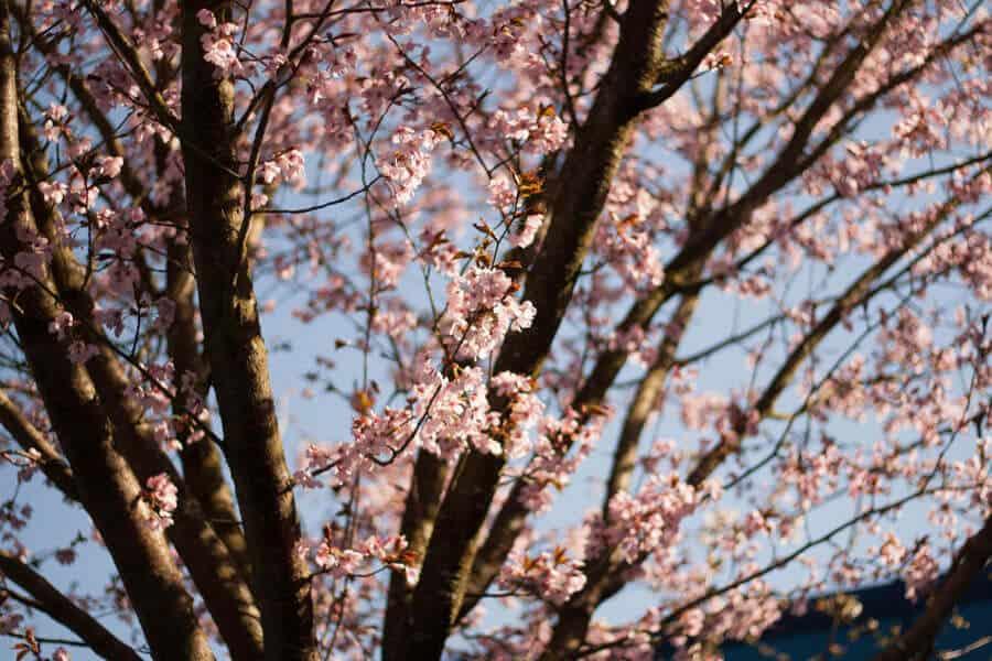 Blütenpracht im Frühling