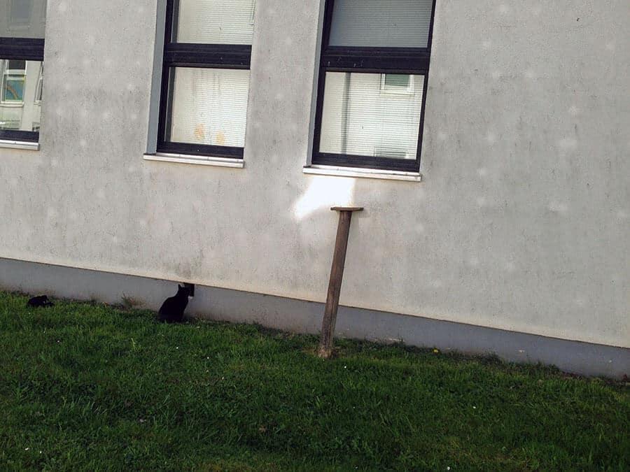 Campus Katze