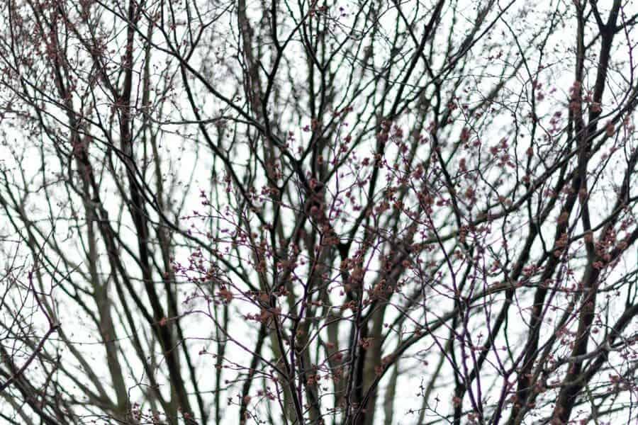 Ein Baum in Kerkrade