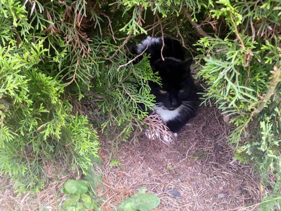 Bei den Eltern angekommen und zuerst die Katze gesucht. Gelegen hat sich in Büschen.
