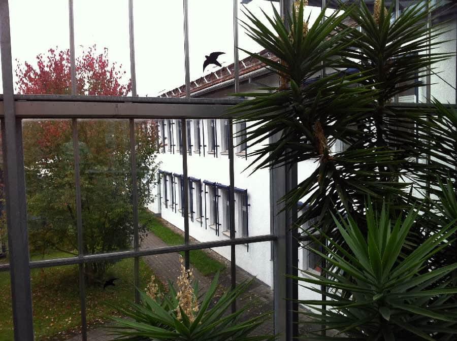 Glasfront mit Pflanzen am Umwelt-Campus