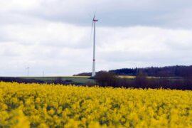 Geierlay Natur Hunsrück